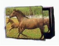 TV Screen Magnifier